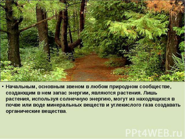 Начальным, основным звеном в любом природном сообществе, создающим в нем запас энергии, являются растения. Лишь растения, используя солнечную энергию, могут из находящихся в почве или воде минеральных веществ и углекислого газа создавать органически…