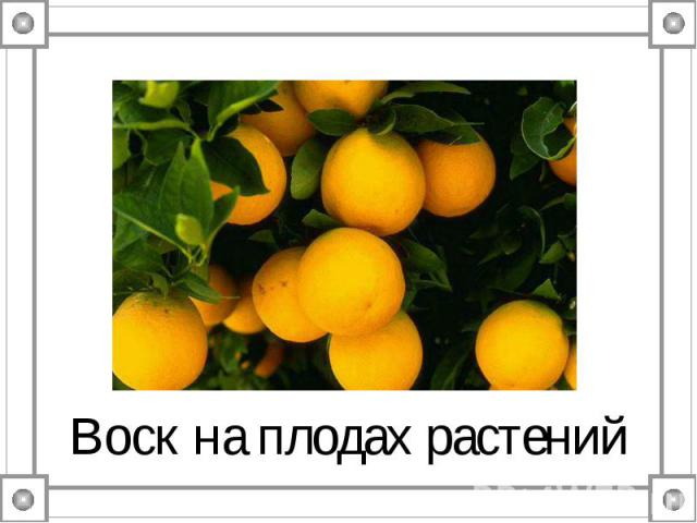 Воск на плодах растений
