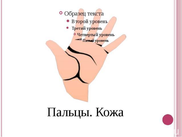Пальцы. Кожа
