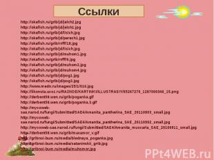 Ссылки http://okafish.ru/grib/jd/jelch2.jpghttp://okafish.ru/grib/jd/jelch1.jpgh