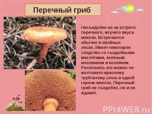 Перечный гриб Несъедобен из-за острого перечного, жгучего вкусамякоти. Встречает
