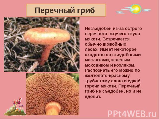 Перечный гриб Несъедобен из-за острого перечного, жгучего вкусамякоти. Встречается обычно в хвойных лесах. Имеет некотороесходство со съедобными маслятами, зеленым моховиком и козляком. Распознать его можно пожелтовато-красному трубчатому слою и едк…