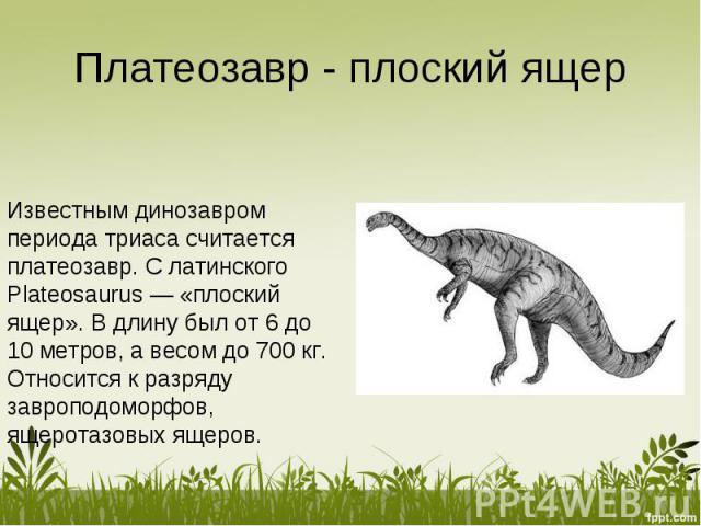 Платеозавр - плоский ящер Известным динозавром периода триаса считается платеозавр. С латинского Plateosaurus — «плоский ящер». В длину был от 6 до 10 метров, а весом до 700 кг. Относится к разряду завроподоморфов, ящеротазовых ящеров.