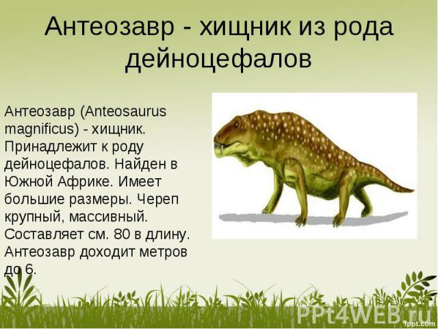Антеозавр - хищник из рода дейноцефалов Антеозавр (Anteosaurus magnificus) - хищник. Принадлежит к роду дейноцефалов. Найден в Южной Африке. Имеет большие размеры. Череп крупный, массивный. Составляет см. 80 в длину. Антеозавр доходит метров до 6.