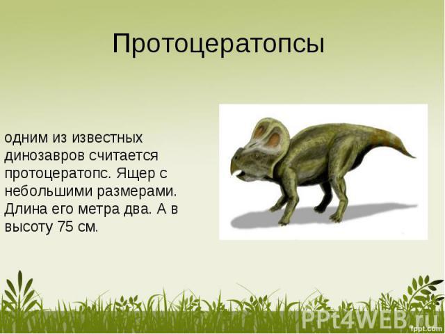 Протоцератопсы одним из известных динозавров считается протоцератопс. Ящер с небольшими размерами. Длина его метра два. А в высоту 75 см.
