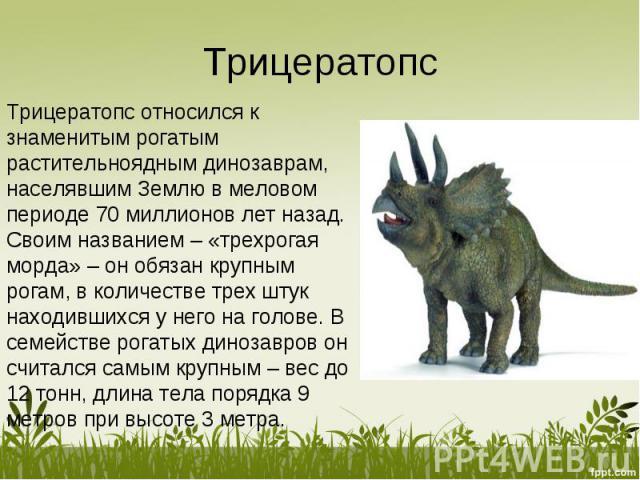 Трицератопс относился к знаменитым рогатым растительноядным динозаврам, населявшим Землю в меловом периоде 70 миллионов лет назад.Своим названием – «трехрогая морда» – он обязан крупным рогам, в количестве трех штук находившихся у него на голове. В …