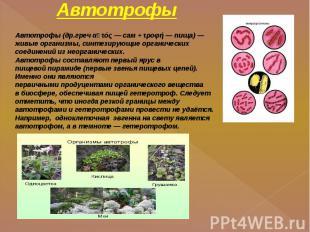 Автотрофы Автотрофы(др.гречαὐτός—сам+τροφή—пища)— живые организмы, синт