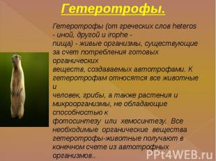 Гетеротрофы. Гетеротрофы (от греческих слов heteros - иной, другой и irophe -пищ
