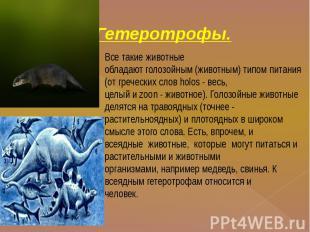Гетеротрофы. Все такие животныеобладают голозойным (животным) типом питания (от