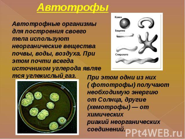 Автотрофы Автотрофные организмы для построения своего тела используют неорганические вещества почвы, воды, воздуха. При этом почти всегда источникомуглеродаявляетсяуглекислый газ. При этом одни из них ( фототрофы) получают необходимую энергию от…