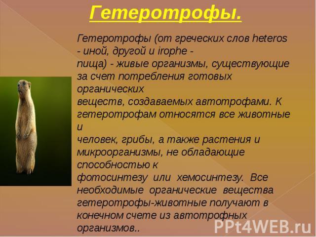 Гетеротрофы. Гетеротрофы (от греческих слов heteros - иной, другой и irophe -пища) - живые организмы, существующие за счет потребления готовых органическихвеществ, создаваемых автотрофами. К гетеротрофам относятся все животные ичеловек, грибы, а так…