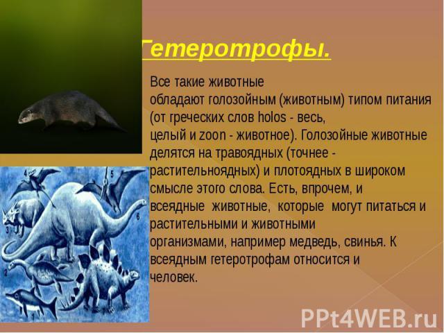 Гетеротрофы. Все такие животныеобладают голозойным (животным) типом питания (от греческих слов holos - весь,целый и zoon - животное). Голозойные животные делятся на травоядных (точнее -растительноядных) и плотоядных в широком смысле этого слова. Ест…