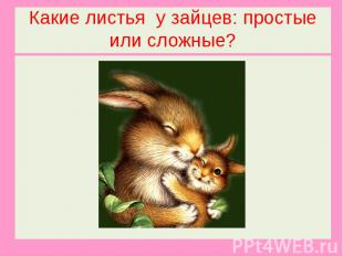 Какие листья у зайцев: простые или сложные?