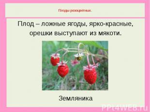 Плоды розоцветных.Плод – ложные ягоды, ярко-красные,орешки выступают из мякоти.З