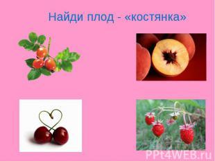 Найди плод - «костянка»