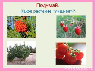 Подумай.Какое растение «лишнее»?