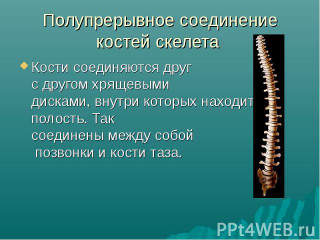 Полупрерывное соединение костей скелета Кости соединяются друг с другом хрящевыми дисками, внутри которых находится полость. Так соединены между собой позвонки и кости таза.