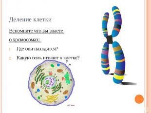 Деление клетки Вспомните что вы знаете о хромосомах: Где они находятся?Какую рол
