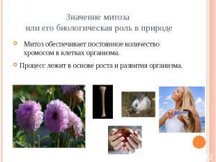 Значение митоза или его биологическая роль в природе Митоз обеспечивает постоянн