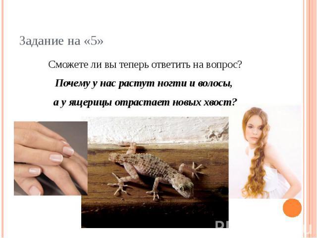 Задание на «5» Сможете ли вы теперь ответить на вопрос?Почему у нас растут ногти и волосы, а у ящерицы отрастает новых хвост?