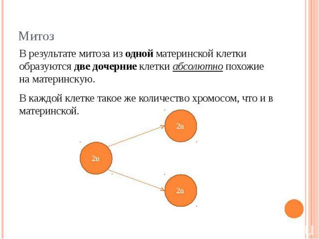 В результате митоза из одной материнской клетки образуются две дочерние клетки абсолютно похожие на материнскую. В каждой клетке такое же количество хромосом, что и в материнской.