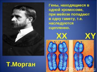Гены, находящиеся в одной хромосоме, при мейозе попадают в одну гамету, т.е. нас