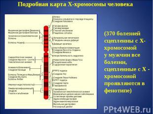 Подробная карта Х-хромосомы человека (370 болезней сцепленны с Х-хромосомойу муж