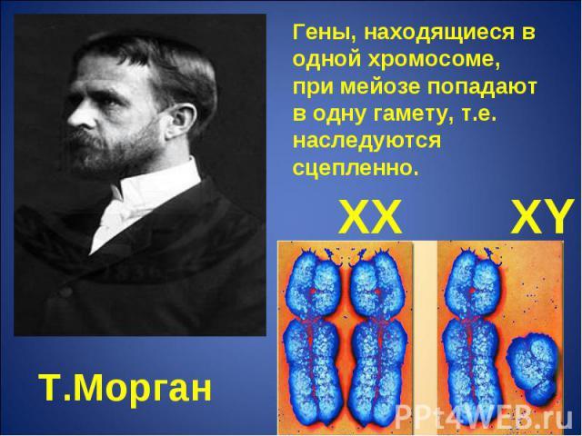 Гены, находящиеся в одной хромосоме, при мейозе попадают в одну гамету, т.е. наследуются сцепленно. Т.Морган