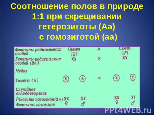 Соотношение полов в природе 1:1 при скрещивании гетерозиготы (Аа) с гомозиготой (аа)