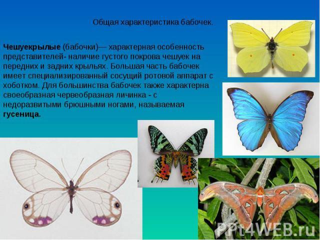 Общая характеристика бабочек. Чешуекрылые (бабочки)— характерная особенность представителей- наличие густого покрова чешуек на передних и задних крыльях. Большая часть бабочек имеет специализированный сосущий ротовой аппарат с хоботком. Для большинс…