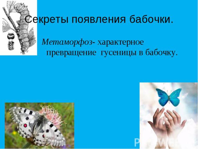 Секреты появления бабочки. Метаморфоз- характерное превращение гусеницы в бабочку.