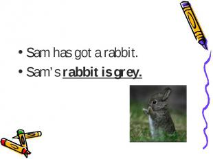 Sam has got a rabbit.Sam's rabbit is grey.