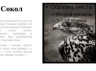 Сокол Сокол пользовался в русском фольклоре большим почетом. Он считался воплоще