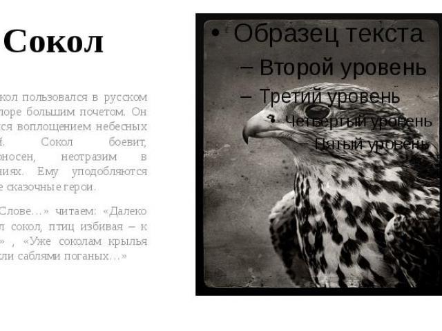 Сокол Сокол пользовался в русском фольклоре большим почетом. Он считался воплощением небесных стихий. Сокол боевит, победоносен, неотразим в сражениях. Ему уподобляются многие сказочные герои. В «Слове…» читаем: «Далеко залетел сокол, птиц избивая –…