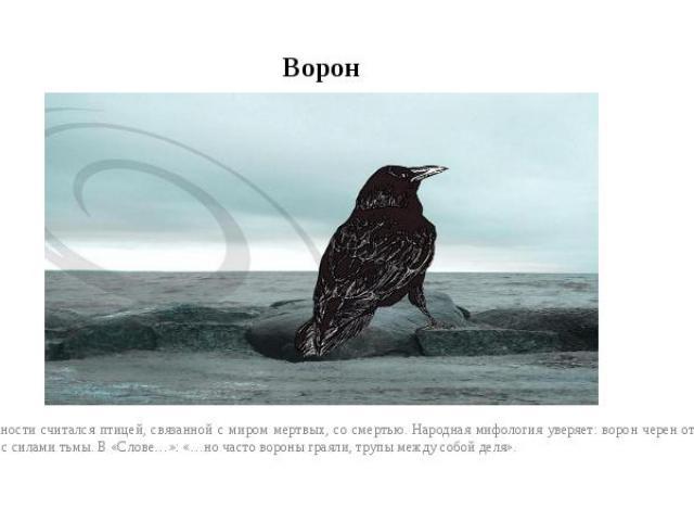 ВоронВ древности считался птицей, связанной с миром мертвых, со смертью. Народная мифология уверяет: ворон черен оттого, что связан с силами тьмы. В «Слове…»: «…но часто вороны граяли, трупы между собой деля».