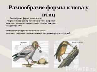 Разнообразие формы клюва у птиц Разнообразие формы клюва у птиц Форма клюва и ра