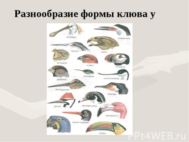 Разнообразие формы клюва у птиц