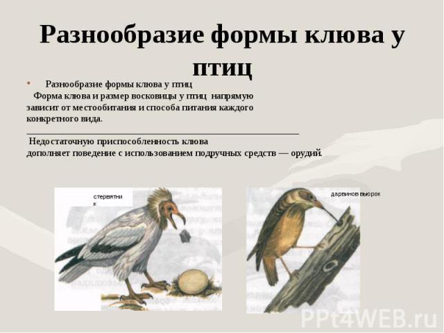 Разнообразие формы клюва у птиц Разнообразие формы клюва у птиц Форма клюва и размер восковицы у птиц напрямуюзависит от местообитания и способа питания каждого конкретного вида._______________________________________________________ Недостаточную п…