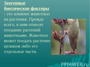 Зоогенные биотические факторы - это влияние животных на растения. Прежде всего,