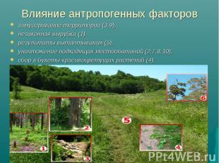 Влияние антропогенных факторов замусоривание территории (3,9), незаконная вырубк