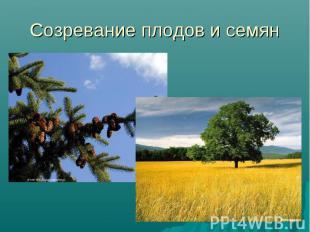 Созревание плодов и семян