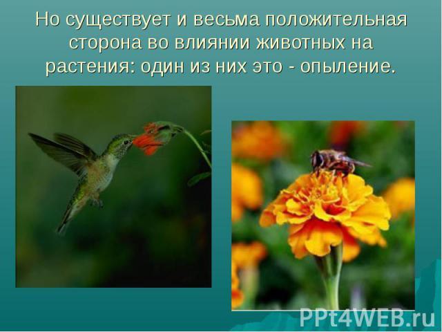 Но существует и весьма положительная сторона во влиянии животных на растения: один из них это - опыление.