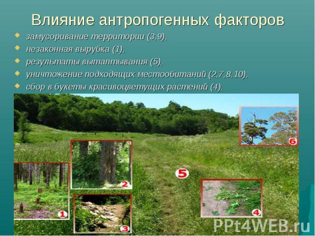 Влияние антропогенных факторов замусоривание территории (3,9), незаконная вырубка (1), результаты вытаптывания (5), уничтожение подходящих местообитаний (2,7,8,10), сбор в букеты красивоцветущих растений (4),