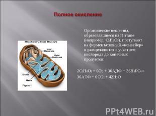 Органические вещества, образовавшиеся на II этапе (например, С3Н6О3), поступают