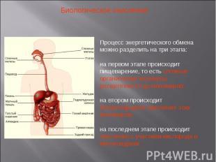 Биологическое окисление Процесс энергетического обмена можно разделить на три эт