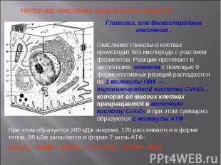 Неполное окисление органических веществ Гликолиз, или бескислородное окисление .