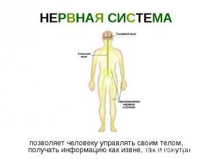 НЕРВНАЯ СИСТЕМА позволяет человеку управлять своим телом, получать информацию ка