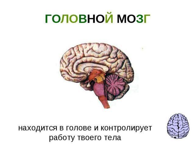 ГОЛОВНОЙ МОЗГ находится в голове и контролирует работу твоего тела
