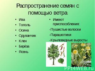 Распространение семян с помощью ветра ИваТопольОсинаОдуванчикКленБерёзаЯсень