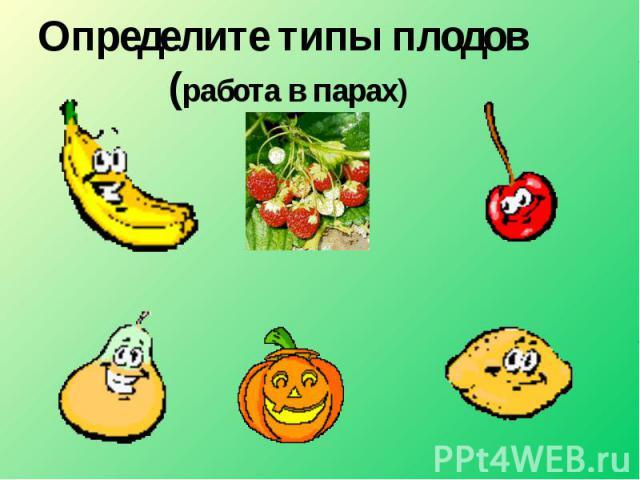 Определите типы плодов (работа в парах)